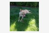 Používateľ mariana11 našiel psíka