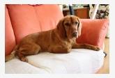 Používateľ Palmina našiel psíka