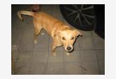 Používateľ sylvika797 našiel psíka
