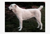 Profil psíka patrí používateľovi abad-abdze