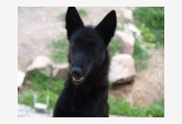 Profil psíka patrí používateľovi Achady