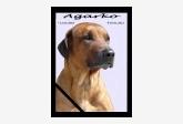 Profil psíka patrí používateľovi Adriana B