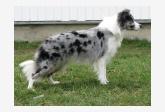 Profil psíka patrí používateľovi AlicaGGG