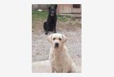Profil psíka patrí používateľovi angiee_ka