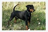 Profil psíka patrí používateľovi AnnaR