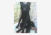 Profil psíka patrí používateľovi Ashley