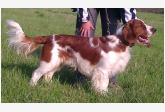 Profil psíka patrí používateľovi Atina