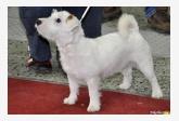 Profil psíka patrí používateľovi Bajo
