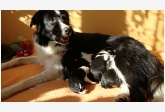 Profil psíka patrí používateľovi Barbora Janošková