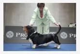 Profil psíka patrí používateľovi bassetcyril