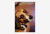 Profil psíka patrí používateľovi BenkaBibo