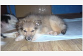 Profil psíka patrí používateľovi connie