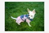 Profil psíka patrí používateľovi DannyL