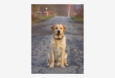 Profil psíka patrí používateľovi deall