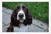 Profil psíka patrí používateľovi Denisa