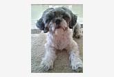 Profil psíka patrí používateľovi Dominika a Dolly