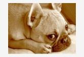 Profil psíka patrí používateľovi Eduard Urban Erdely