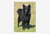 Profil psíka patrí používateľovi Esticsillag