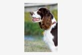 Profil psíka patrí používateľovi Federika