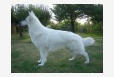 Profil psíka patrí používateľovi Ferris