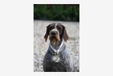 Profil psíka patrí používateľovi fuzkar