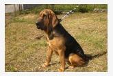 Profil psíka patrí používateľovi Gaľaš Miroslav