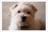 Profil psíka patrí používateľovi ivqua