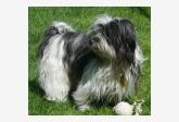 Profil psíka patrí používateľovi Jana Madrová