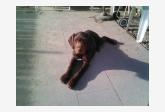 Profil psíka patrí používateľovi kido