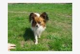 Profil psíka patrí používateľovi La Perry
