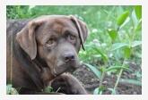 Profil psíka patrí používateľovi Lab s Valley