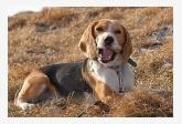 Profil psíka patrí používateľovi Luciak