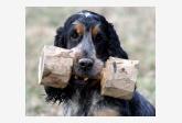 Profil psíka patrí používateľovi majco