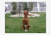 Profil psíka patrí používateľovi marta