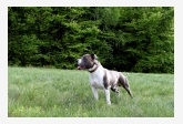 Profil psíka patrí používateľovi Martin Šumanský