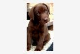 Profil psíka patrí používateľovi Marulienka
