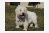 Profil psíka patrí používateľovi Michaela Martineková