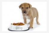 Profil psíka patrí používateľovi milanko25