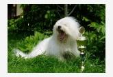Profil psíka patrí používateľovi Monika Zbránková