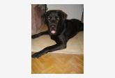Profil psíka patrí používateľovi Nika Konečná