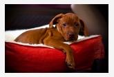 Profil psíka patrí používateľovi Patrik145