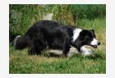 Profil psíka patrí používateľovi petulets