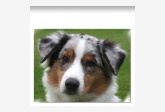 Profil psíka patrí používateľovi Pipus2231