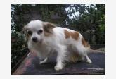 Profil psíka patrí používateľovi Radka9915