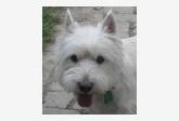 Profil psíka patrí používateľovi renqa