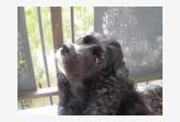 Profil psíka patrí používateľovi rrkoker