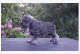 Profil psíka patrí používateľovi silvergotcha