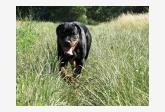 Profil psíka patrí používateľovi silvia rtw