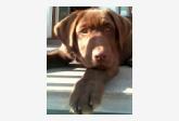 Profil psíka patrí používateľovi simafibi