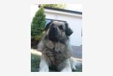 Profil psíka patrí používateľovi Skibbe